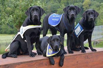 Schweizerische Schule für Blindenführhunde
